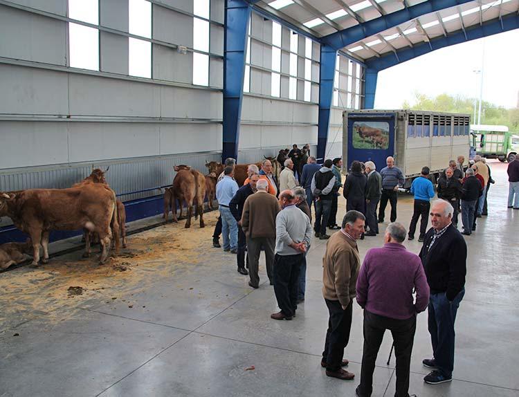 Stock breeding trade fair
