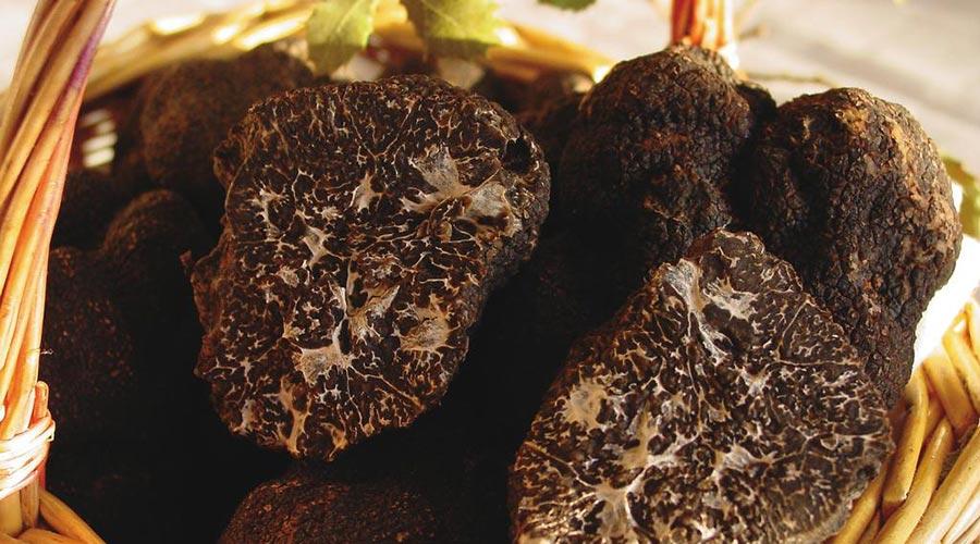 Trufa negra típica de Rubielos de Mora