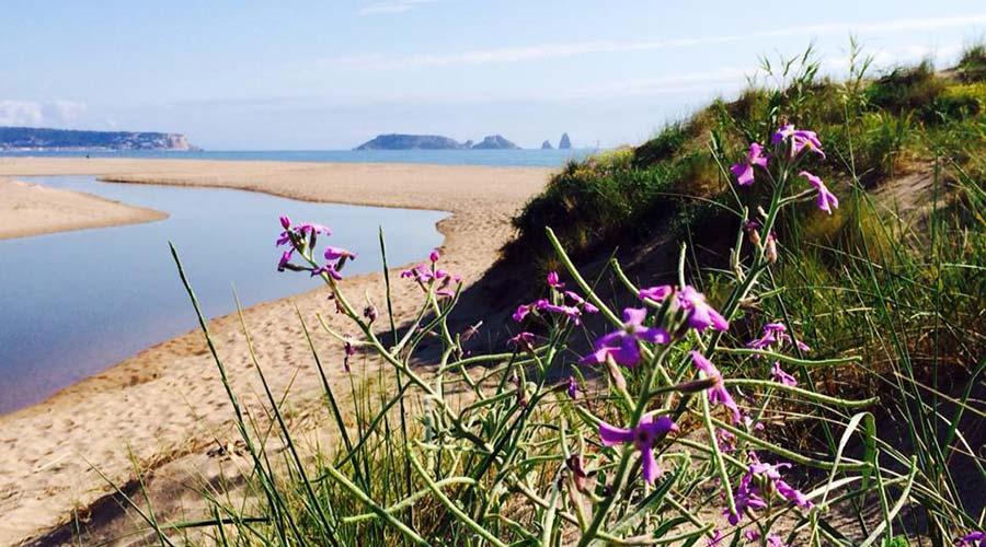 Marsh, flower ( Matthiola Sinuata) and dune in the Grau beach