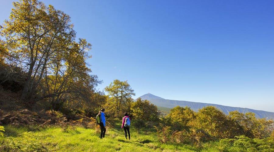Trekking in La Orotava