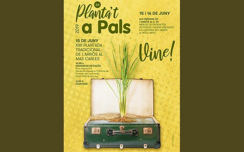 Plantada de arroz en Pals